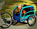 Golden Retriever in Bicycle Dog Trailer