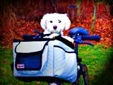 Puppy on Bicycle Dog Carrier