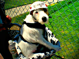 Safety Dog in bicycle dog carrier