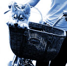 Wicker basket bicycle dog carrier